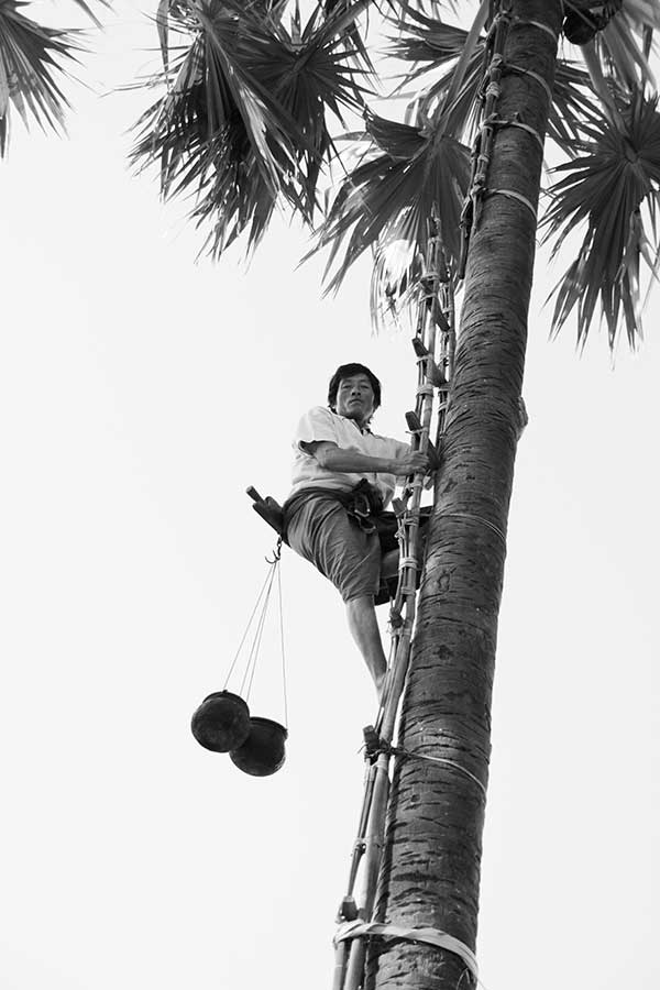 palmierhomme